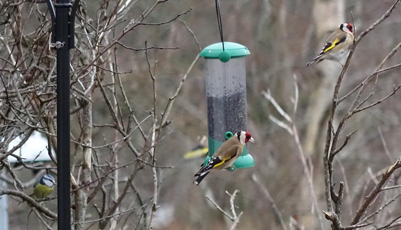 birdfeeder-DSC03858.jpg