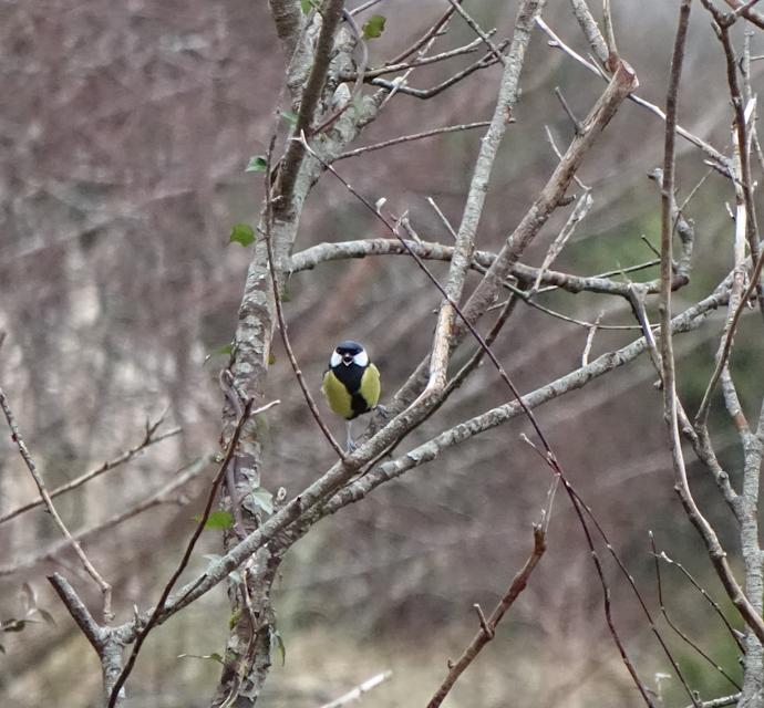 birdfeeder-DSC03869.jpg