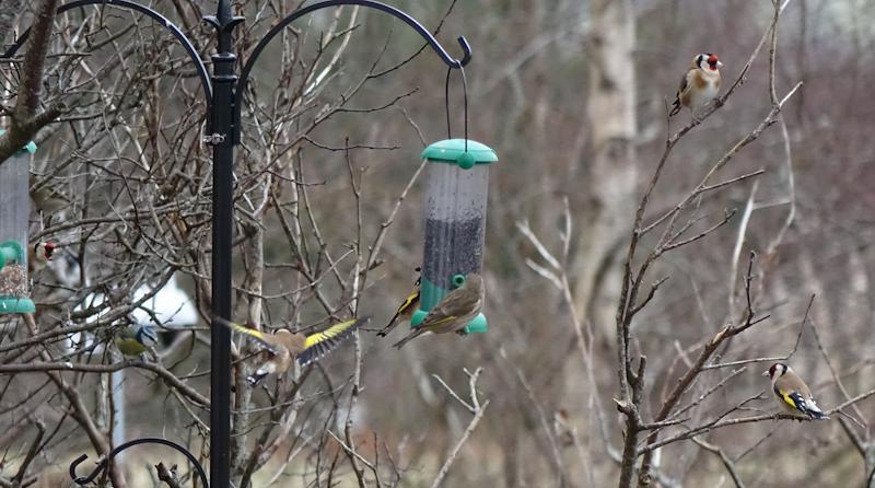birdfeeder-DSC03870.jpg