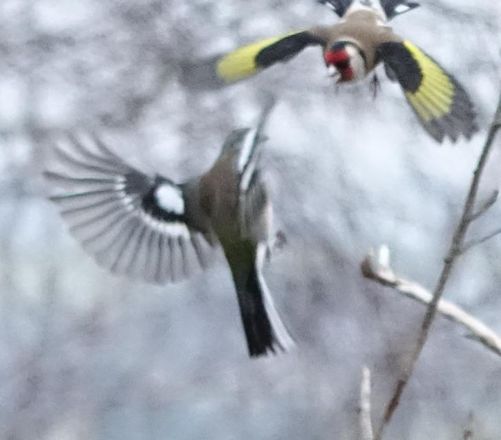 birdfeeder-DSC03881.jpg