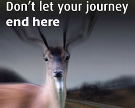 The dangers of collision with Deer on rural roads are highlighted by Noel Gibbons. Click on photo for more.