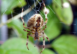 Dalemedia has added close-up photos of garden spiders feeding. Click on photo  for a closer look at these arachnids!