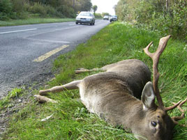 On a day with a severe weather alert issued by the Met Office a road safety message about Deer. Click on photo for more.