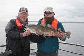 A fine cod caught in Killala Bay. Click above for more angling news.