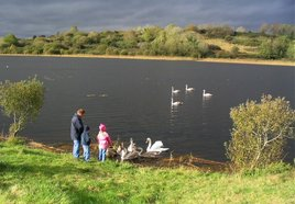 Reports to our BB suggest that swans are sick and dying on lough Lannagh because people are feeding them bread! Click on photo for more.