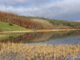 Bernard Kennedy has photos of Rusheen Lough taken on 30 Nov 2013. Click on photo to scroll through his latest additions.