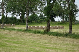 Lots of hay baled up in our local fields. Click on photo for more dried grass.