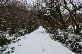Lough Rusheen Bog Road under snow. Click for more from Bernard Kennedy.